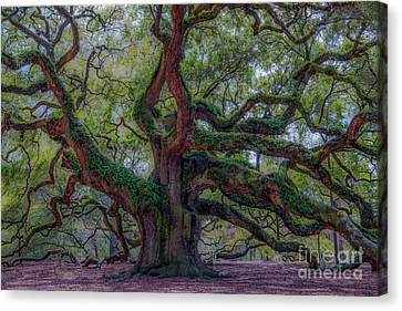 Angel Oak Tree Deeply Rooted History Canvas Print by Dale Powell