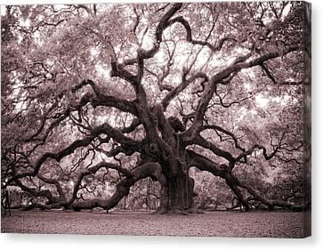 Angel Oak Tree Canvas Print by Dustin K Ryan