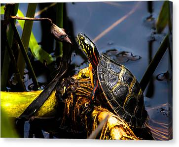 Ant Meets Turtle Canvas Print by Bob Orsillo
