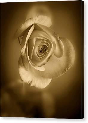 Antique Soft Rose Canvas Print by M K  Miller