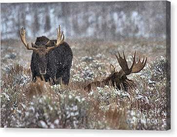 Antlers In The Brush Canvas Print by Adam Jewell