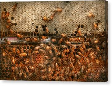 Apiary - Bee's - Sweet Success Canvas Print by Mike Savad