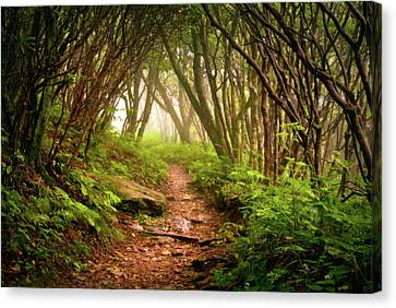 Appalachian Hiking Trail - Blue Ridge Mountains Forest Fog Nature Landscape Canvas Print by Dave Allen