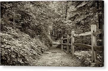 Appalachian Trail At Newfound Gap - Sepia Canvas Print by Stephen Stookey
