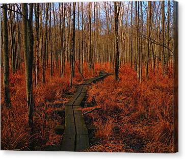 Appalachian Trail Boardwalk Canvas Print by Raymond Salani III