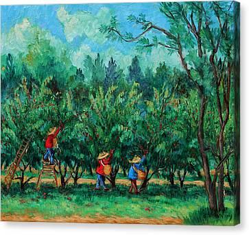 Apple Pickers  Littletree Orchard  Ithaca Ny Canvas Print by Ethel Vrana