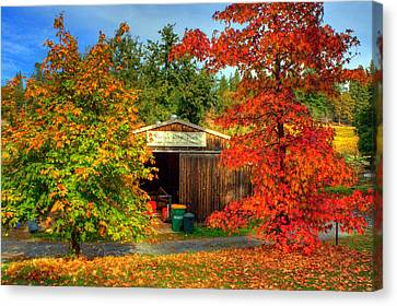 Apple Shed Canvas Print by Randy Wehner Photography