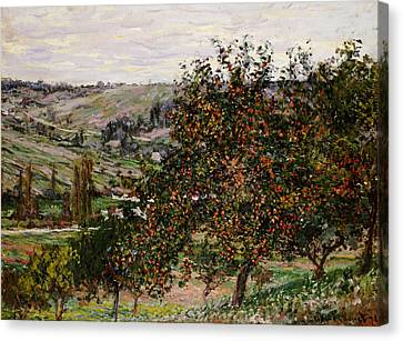 Apple Trees Near Vetheuil Canvas Print by Claude Monet