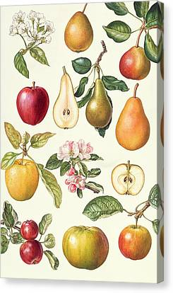 Apples And Pears Canvas Print by Elizabeth Rice