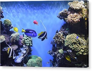 Aquarium 2 Canvas Print by Barbara Snyder