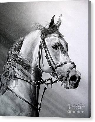 Arabian Beauty Canvas Print by Miro Gradinscak