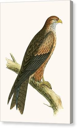 Arabian Kite Canvas Print by English School
