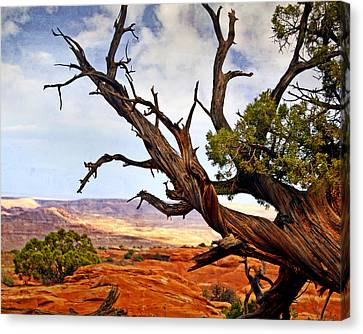 Arches Landscape 7a Canvas Print by Marty Koch