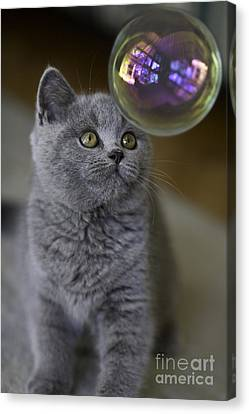 Archie With Bubble Canvas Print by Avalon Fine Art Photography