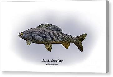 Arctic Grayling Canvas Print by Ralph Martens