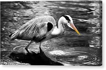 Ardea Cinerea - Grey Heron Canvas Print by Mark Rogan