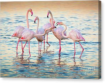 Arguing Flamingos Canvas Print by Inge Johnsson