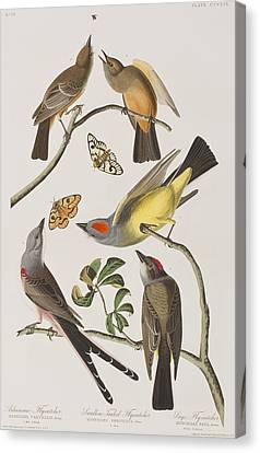 Arkansaw Flycatcher Swallow-tailed Flycatcher Says Flycatcher Canvas Print by John James Audubon