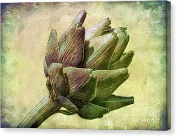 Artichoke Canvas Print by Susan Isakson
