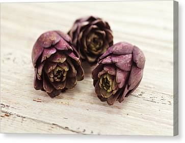 Artichokes Canvas Print by James And James