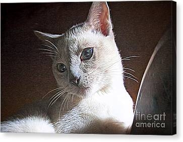 Artistic Kitty Canvas Print by Linda Phelps