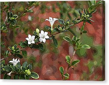 Artistic White Floral Canvas Print by Aimee L Maher Photography and Art Visit ALMGallerydotcom