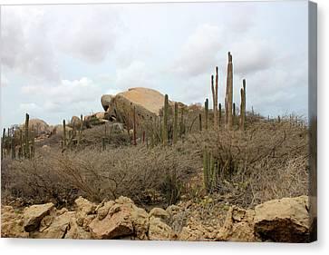 Aruba Desert Landscape Canvas Print by Design Turnpike
