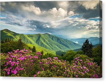 Asheville Nc Blue Ridge Parkway Spring Flowers Canvas Print by Dave Allen