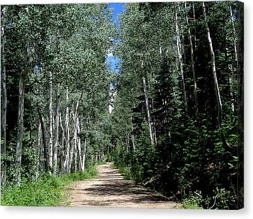 Aspen Avenue Canvas Print by Feva Fotos