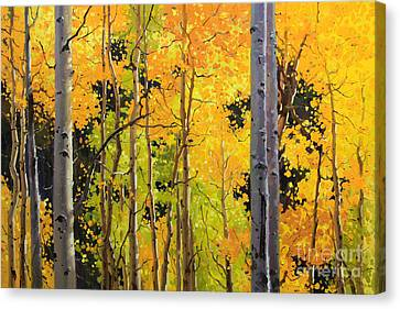 Aspen Trees Canvas Print by Gary Kim