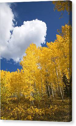 Aspens And Sky Canvas Print by Ron Dahlquist - Printscapes