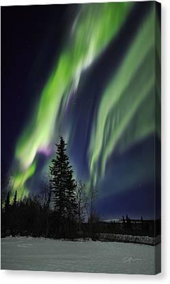 Aurora Grasp Canvas Print by Ed Boudreau
