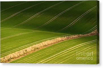 Aurulent Green Canvas Print by Richard Thomas