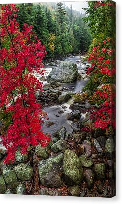 Ausable River Canvas Print by Mark Papke