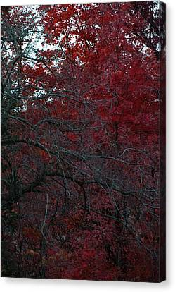 Autumn 2015 Red Trees Pa 02 Vertical Canvas Print by Thomas Woolworth