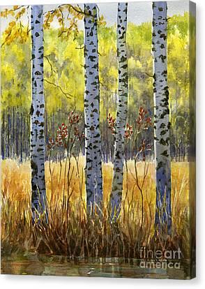 Autumn Birch Trees In Shadow Canvas Print by Sharon Freeman