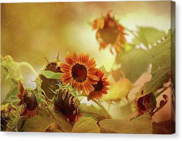 Autumn Blessings Canvas Print by Theresa Campbell
