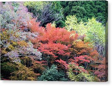 Autumn Colors Canvas Print by Demerval Arruda, Jr.
