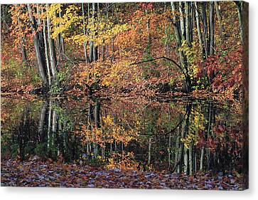Autumn Colors Reflect Canvas Print by Karol Livote