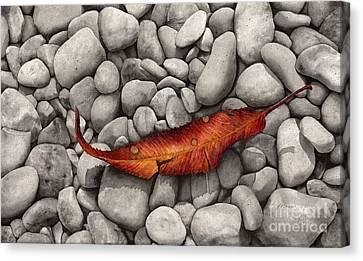 Autumn Epilogue Canvas Print by Hailey E Herrera