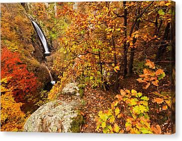Autumn Falls Canvas Print by Evgeni Dinev