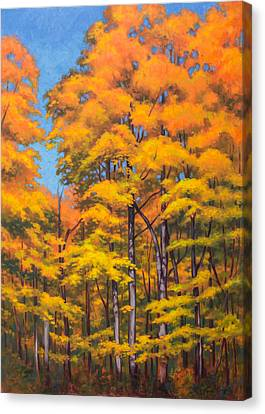 Autumn Forest 1 Canvas Print by Fiona Craig