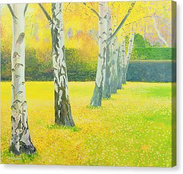 Autumn Gold Canvas Print by William Ireland