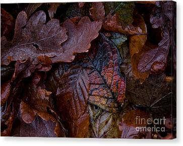 Autumn Ground Canvas Print by Sverre Andreas Fekjan