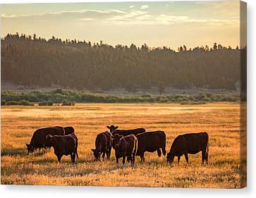 Autumn Herd Canvas Print by Todd Klassy