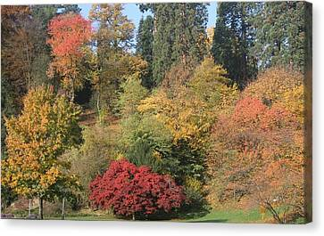 Canvas Print featuring the photograph Autumn In Baden Baden by Travel Pics