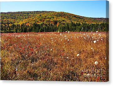 Autumn In The Glades Canvas Print by Thomas R Fletcher