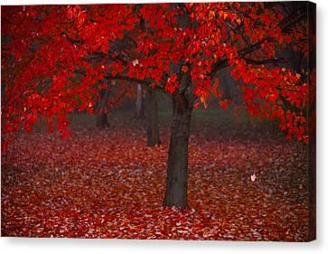 Autumn Canvas Print by Jane Melgaard