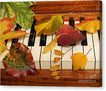 Autumn Leaves Tickle The Ivories Canvas Print by Anna Lisa Yoder