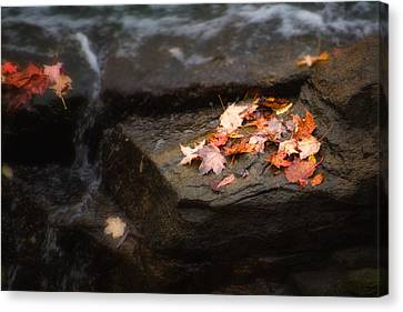 Autumn Leaves Canvas Print by Tom Mc Nemar